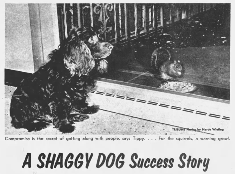 Shaggy Dog Success Story